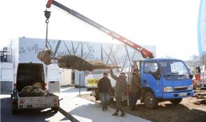В парке «Раздолье» в Волгограде высадили крымские сосны
