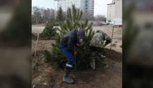 Волгоградскому ЦПКиО добавили немного зелени