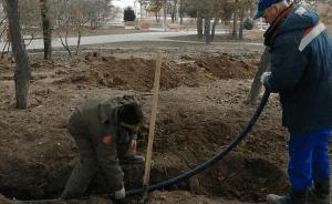 В ЦПКиО в Волгограде появятся 185 крупномерных деревьев