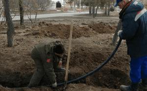 В ЦПКиО Волгограда стартовала высадка деревьев и кустарников