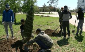 В Волгограде в ЦПКиО высадили 80 крупномерных саженцев дубов и елей