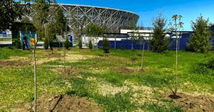 Волгоградский ЦПКиО активно избавляется от залысин