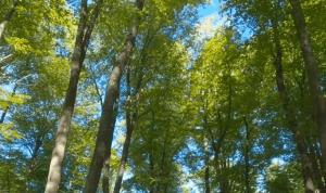 Отдых на природе